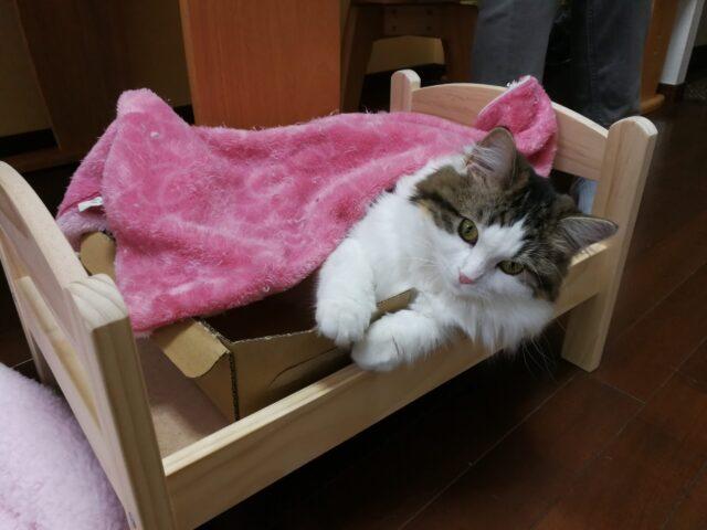 IKEAベッドに奇跡的に入ってくれた猫。